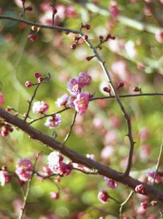 2006_02_12_pen_f_09a_