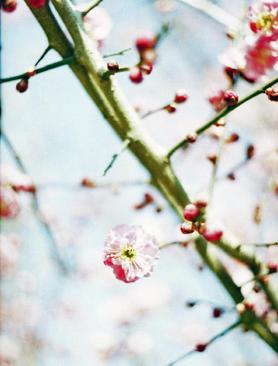 2006_02_12_pen_f_19_