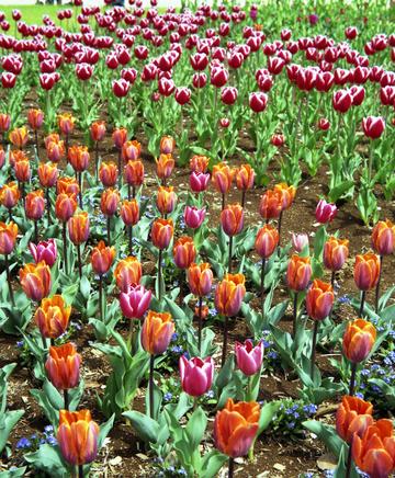 2006_04_13_olympus_six_10