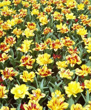 2006_04_13_olympus_six_11