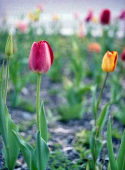 2006_04_13_pen_f_02a