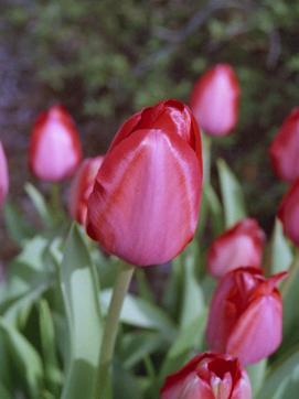 2006_04_15_penf_002_25