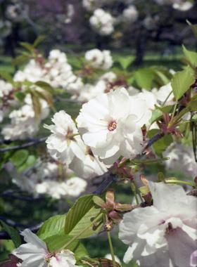 2006_04_17_penf_01a