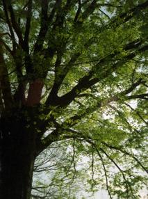 2006_04_28_fujica_mini_22