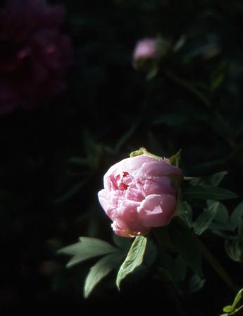 2006_04_28_pen_f_06a