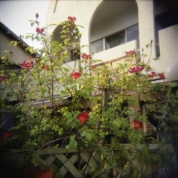 2006_05_01_holga_08