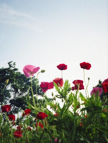 2006_05_22_canon_demi_001_17