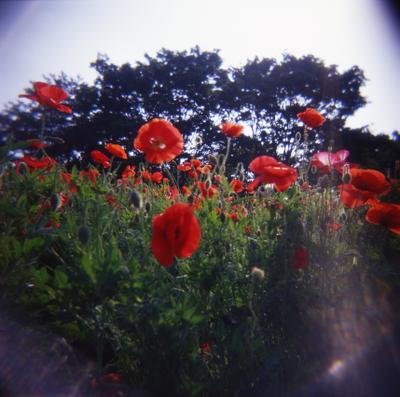 2006_05_22_holga_01