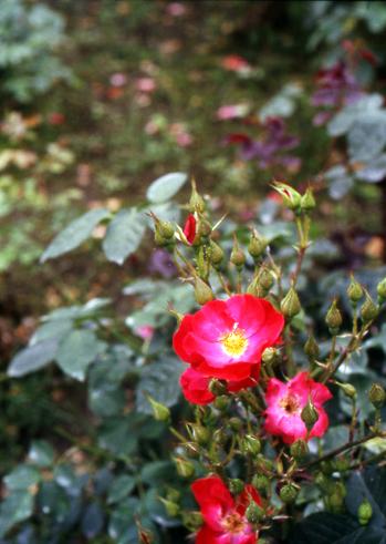 2006_06_10_pen_f_28