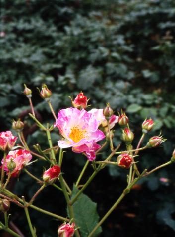 2006_06_10_pen_f_30a