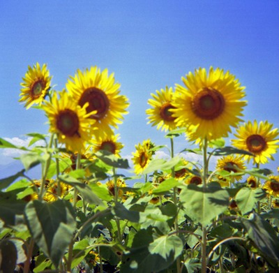 2006_08_10_fujipet_004_08001_1