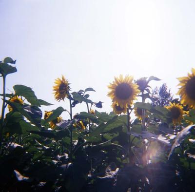2006_08_18_fujipet_005_08001