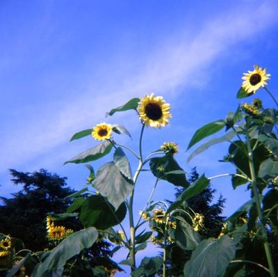 2006_08_18_fujipet_005_09001