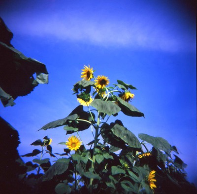 2006_08_18_holga_005_04001
