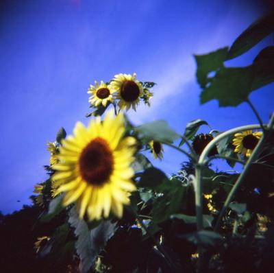 2006_08_18_holga_005_09001