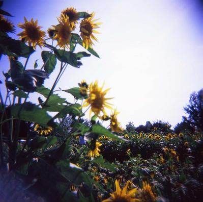 2006_08_18_holga_005_10001
