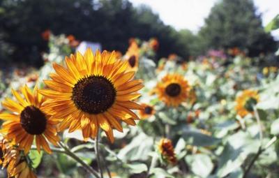2006_08_18_nikon_f80s_037_34001