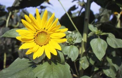 2006_08_18_nikon_f80s_037_36001