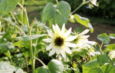 2006_08_18_nikon_f80s_040_09001