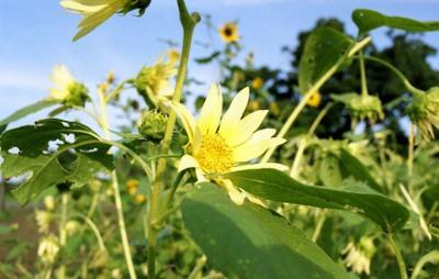 2006_08_18_nikon_f80s_040_18001