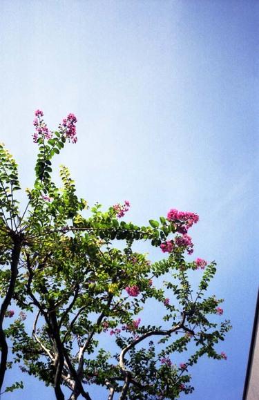 2006_08_18_ricoh_hicolor35_003_01001
