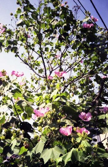 2006_08_18_ricoh_hicolor35_003_08001