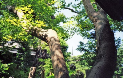 2006_08_24_flash_fujica_005_18001