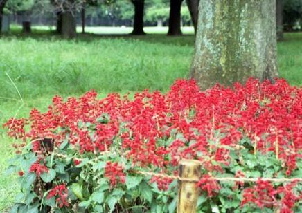 2006_08_31_samuraiz_004_11