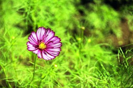 2006_09_20_nikon_f80s_052_12