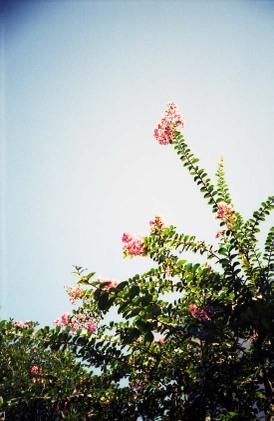 2006_09_20_ricoh_yf20_002_27