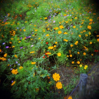 2006_10_12_holga_006_07