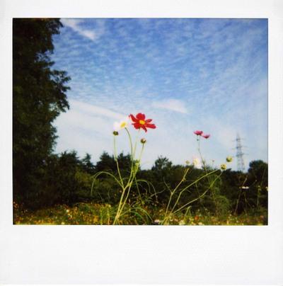 2006_10_12_polaroid_spectra_001_06