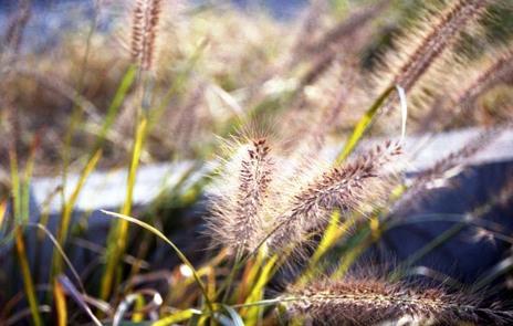 2006_10_29_nikon_f80s_060_11
