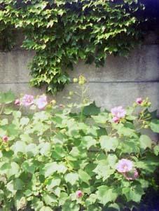 2006_10_fuji_pocket_fujica_aw_01