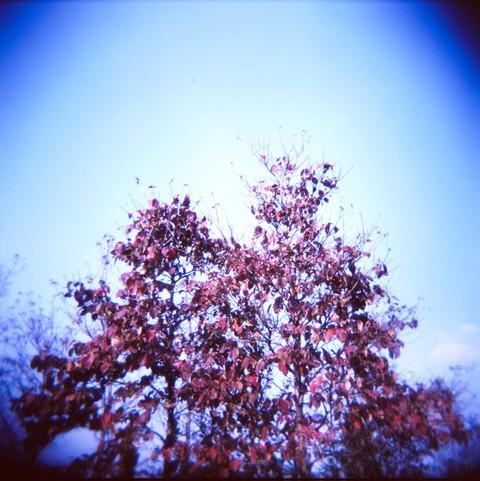 2006_11_03_holga_008_08