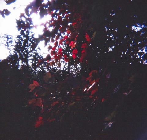 2006_11_05_holga_008_12