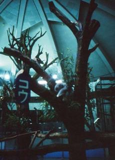 2006_11_07_fujica_half_004_03a
