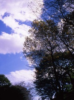 2006_11_07_fujica_half_004_04a