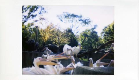 2006_11_07_joycam_008_05