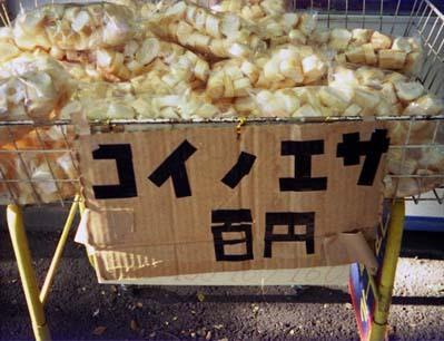 2006_11_09_rollei_a110_001_21