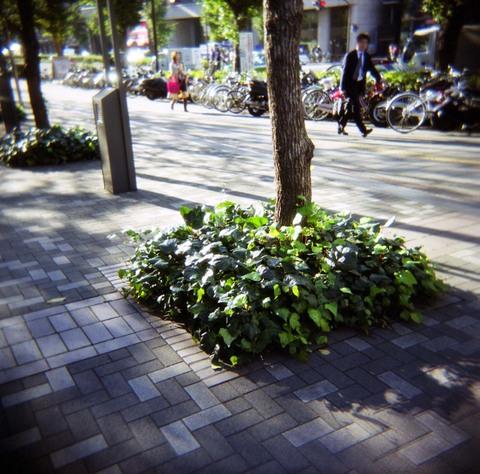 2006_11_14_holga_009_02