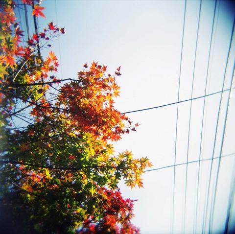 2006_11_16_holga_010_12