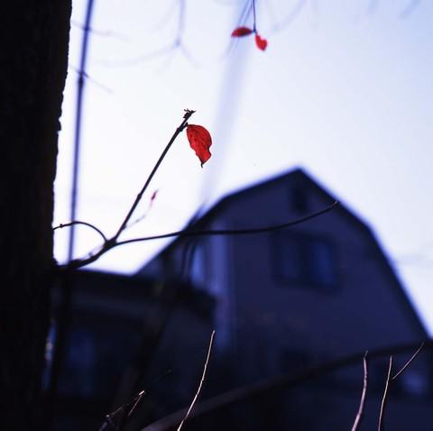2006_11_28_mamiya_c220f_001_06