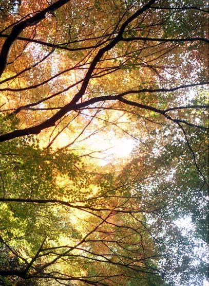 2006_12_04_pen_ee3_010_13a
