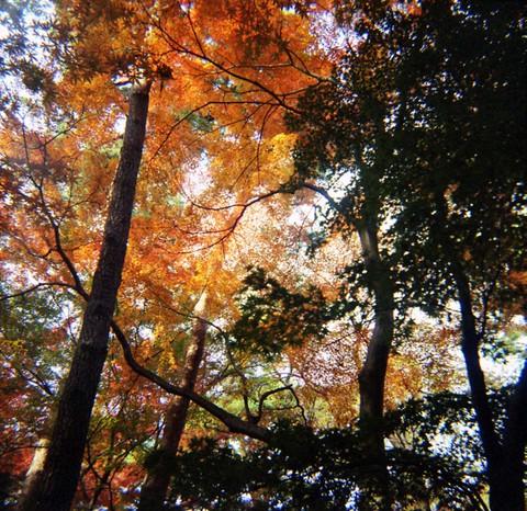 2006_12_05_fujipet_006_04