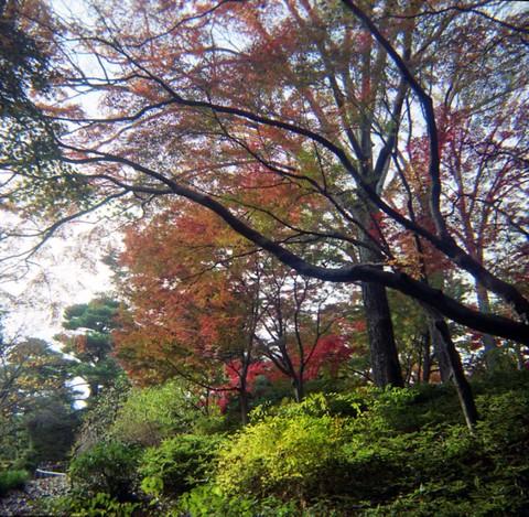 2006_12_05_fujipet_006_05