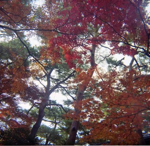 2006_12_05_fujipet_006_09