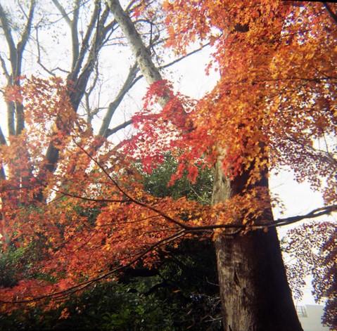2006_12_05_fujipet_006_11