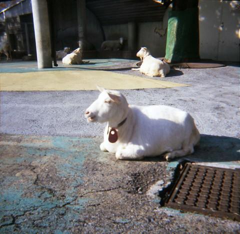 2006_12_06_fujipet_007_05