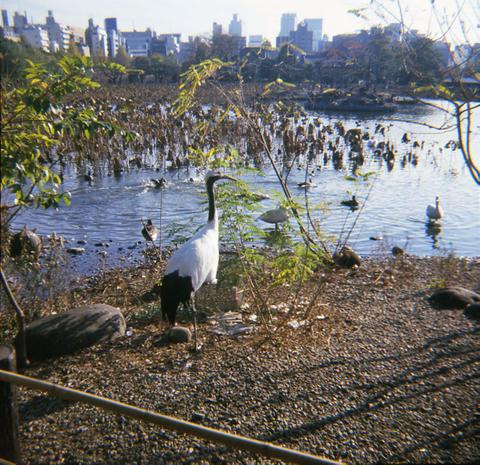 2006_12_06_fujipet_007_10